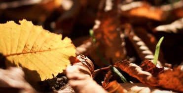 Simmons Gainsford Chartered Accountants Autumn Statement 2015
