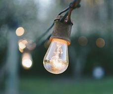 Unsplash photo-Light bulb in trees Procurement Square