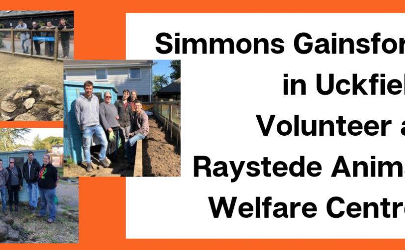 Simmons Gainsford Volunteers Get Stuck In at Raystede Animal Shelter in Lewes